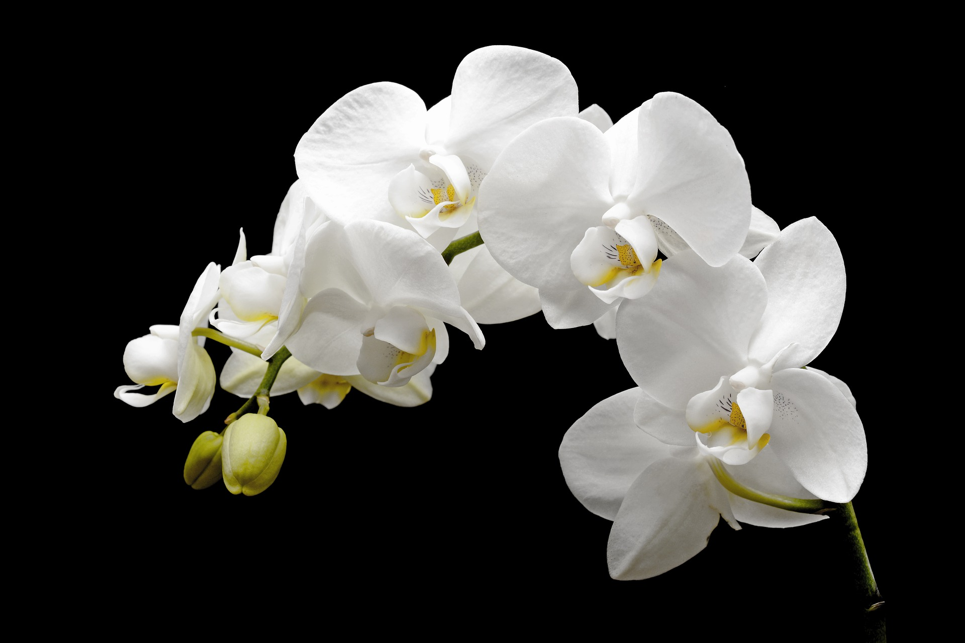 Financial Orchid